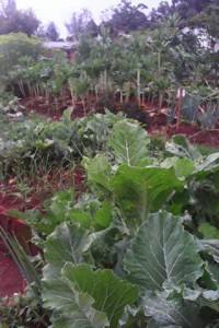 Kenya Gardens