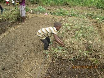 Keeping the soil moist with mulch cover