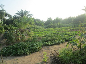 Eric and Kamah's Garden