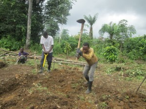 Preparation of new beds for the transplanting .of the remaining seedlings that were ;eft on the nursery (4)