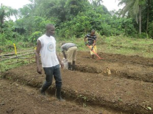 Preparation of new beds for the transplanting .of the remaining seedlings that were ;eft on the nurseryJPG (6)