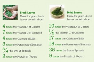 Moringa-benefits 2