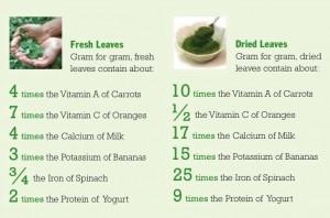 Moringa-benefits 2