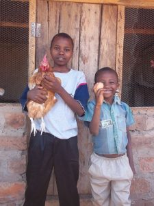 chickens-in-africa