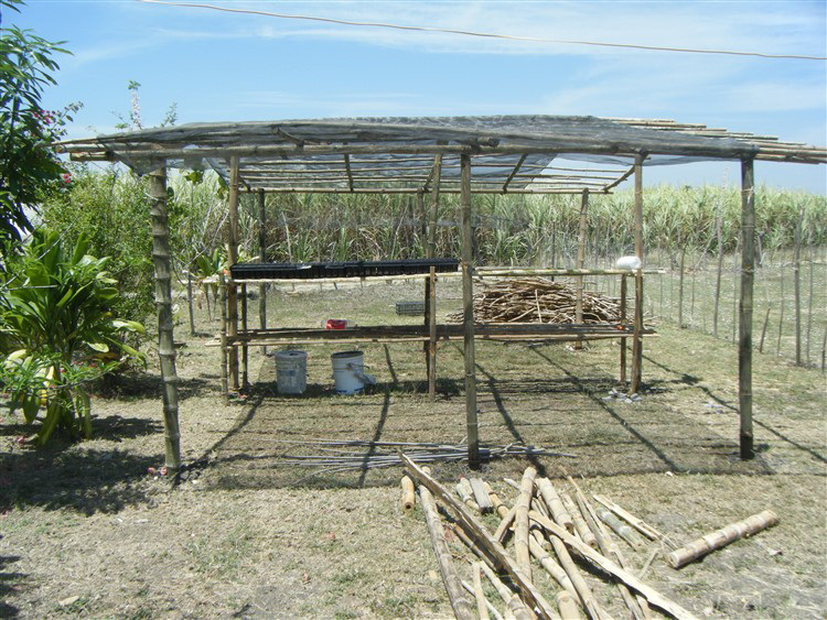 The nursery provides shade for the seedlings