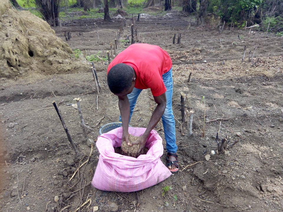 Mixing Manure into the prepared soil.