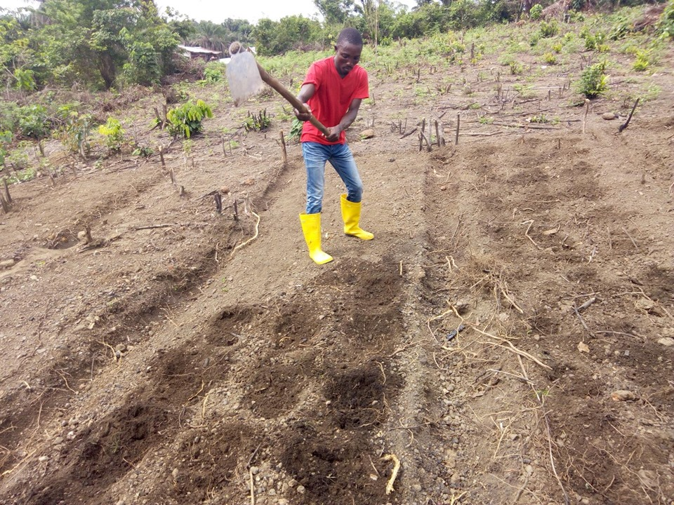 Joseph Wilson has been a great help planting the cucumber beds.