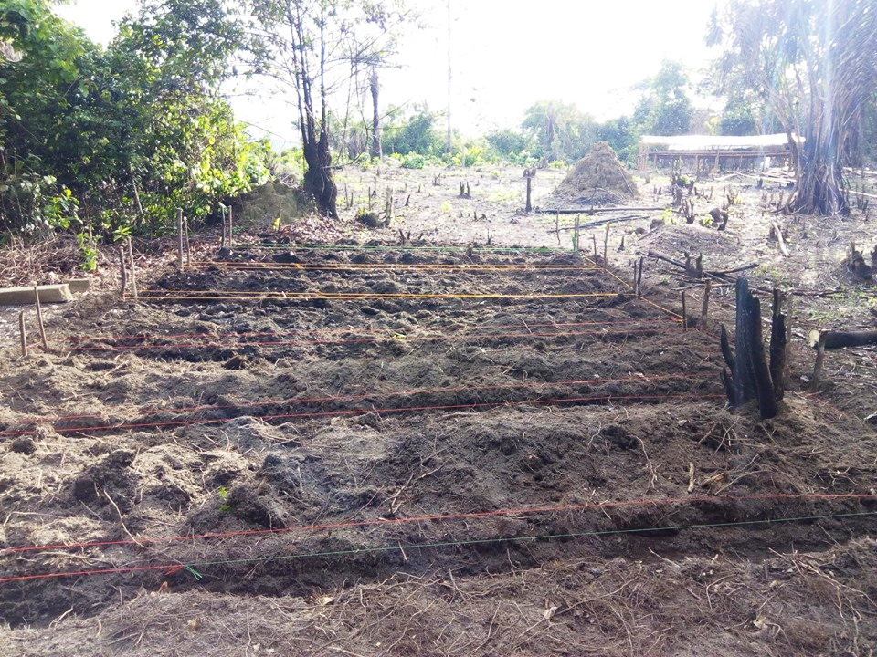 More and more beds are being constructed for seeds.   You can see our compost pile in the distance and the nursery in the back ground.  There is a nice stream of water close by.   On our 2 acres of land we have both wet and dry land.  Liberia has a tropical climate with  hot and humid temperatures year round.  They have a rainy season that lasts from May through October because of the African monsoon and frequent rains throughout the year, The dry season is mostly  from December through February.  This is the time we would plant closer to the stream, on the wetland.